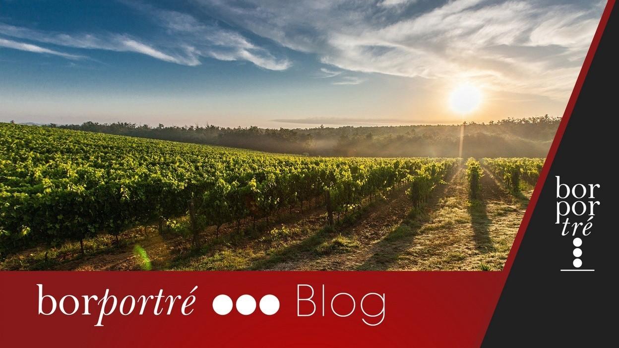 Mitől bio egy bor? – Blog | BorPortré